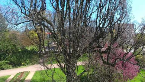 tree green plant summer spring flight video daylight Footage