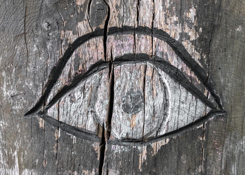 Inlaid eye on the bark of a tree Photo