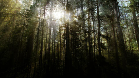 Magical Forest Backgrounds 2