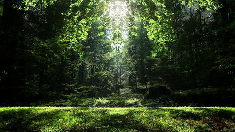Fantasy Forest Scenery Animation