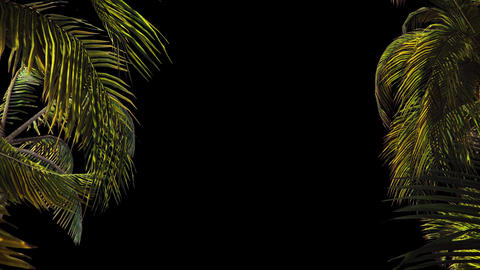 The branches of palm tree in the wind.With alpha channel. Codec-PNG Alpha. CG動画素材
