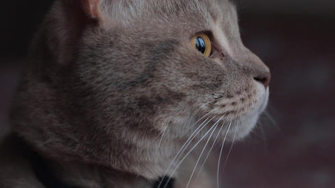 Hunting emotions of the cat who saw the birds Live Action