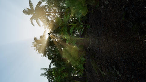 tropical green forest view with sun flare in morning Footage
