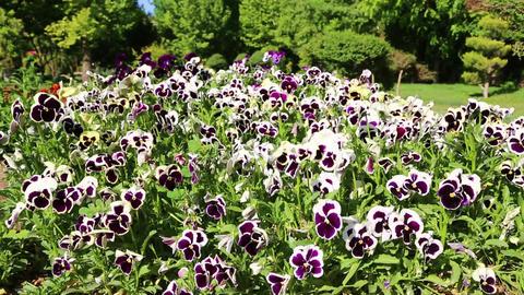 In iran antique garden 006 Footage