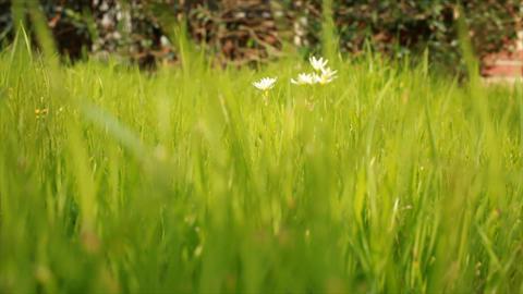 Wildflowers stock footage