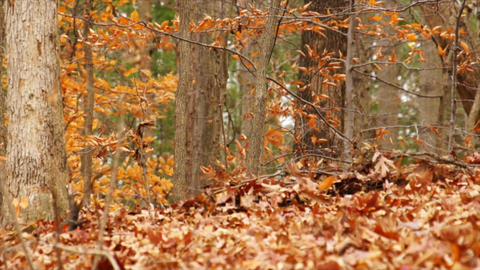 Fall Colors stock footage