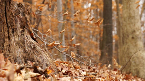 autumn forest Live Action