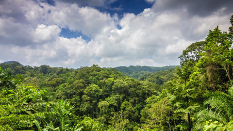 Tropical forest with clouds time lapse Footage