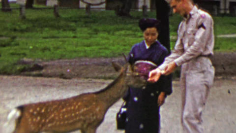 1951: US army man feeding deer with Japanese woman supervising Footage