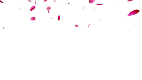 Petal rose pink background white 動画素材, ムービー映像素材
