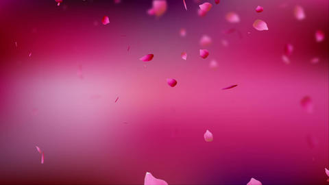 Petal rose pink background pink CG動画