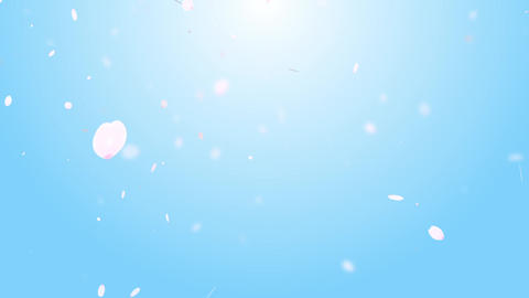 Cherry Blossom petals Background sky Animation