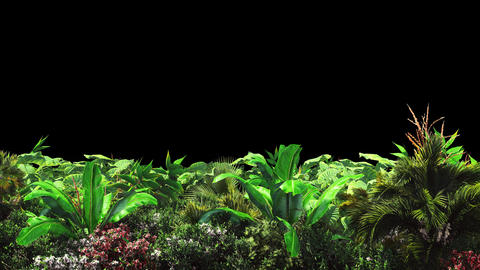 Tropical plants in the wind.With alpha channel. Codec-PNG Alpha. Beautiful Animation