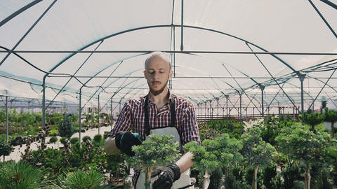 A smiling man works in a greenhouse using a garden tool. The gardener sprinkles Live Action