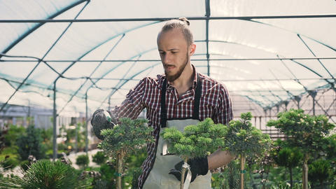 Close up of young man with sprayer watering plants in greenhouse. Care of plants Live Action