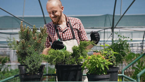 A cheerful gardener, perfectly dancing and caring for plants in a large Footage