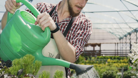 Man gardener in green apron watering plants and flowers with garden sprayer in Live Action