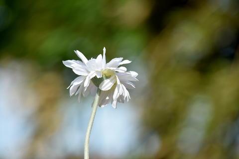 White Flower And Stem Photo