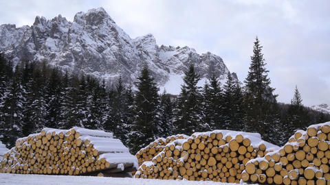 fir logs cut and stacked Archivo