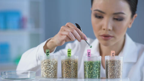 Professional researcher inspecting grains, marking test bottle, farm pesticides Live Action