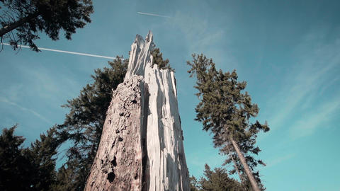 Beautiful Slow Motion Forest with a broken tree in the middle Footage