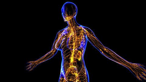 Female Lymphatic System Animation