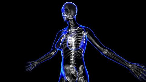Female skeleton Animation