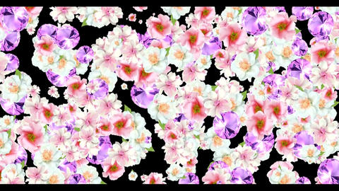 4K FLORAL BACKGROUND Live Action