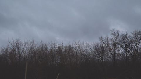 Dark autumn storm clouds fly over the bare trees of the autumn forest Footage