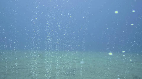 Air bubbles from sandy sea bottom rising to surface point view swimming dive Live Action