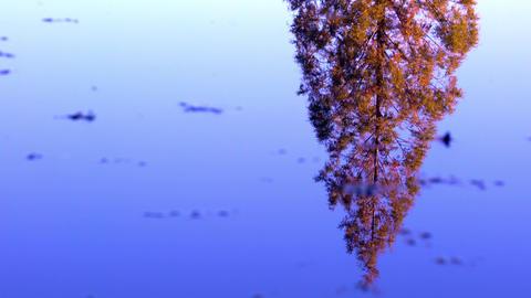 水面に揺れる初秋の木 ビデオ
