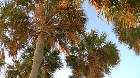 Coconut palm trees, beautiful tropical background ビデオ