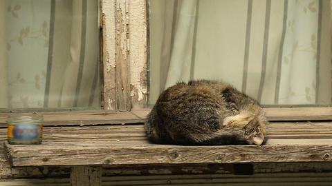 Relaxed cats sleeping on windowsills and house roofs in Tbilisi, stray animals Live Action