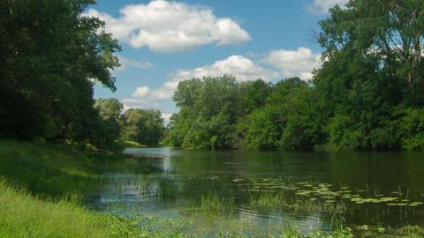 River nature summer timelapse GIF