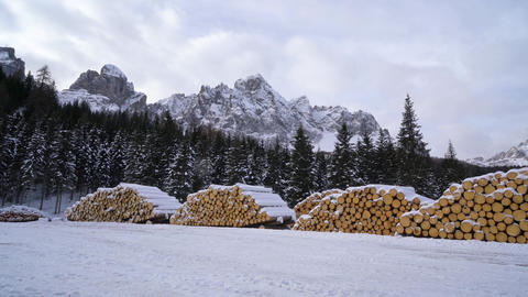 fir logs cut and stacked GIF