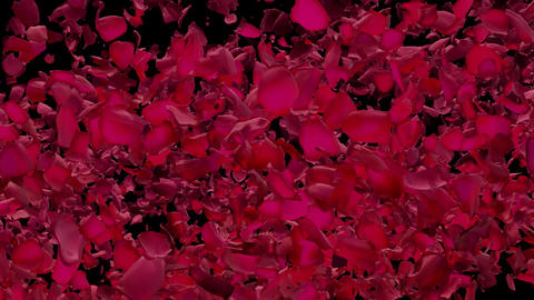 Rose Flower Petal Transitions 2