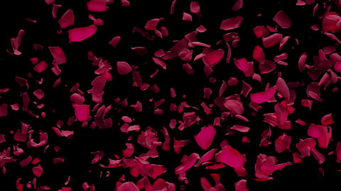 Red Rose Petals Flying from side in Air with Alpha Transparency Matte Transition Animation