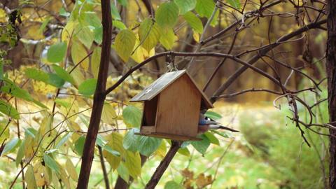 Bird the jay in the bird feeder Footage