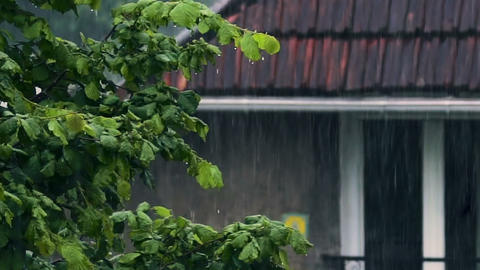 Green tree in front of house in rainy weather, garden nature, autumn nostalgia Live Action