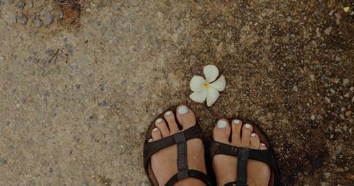 Crop feet standing near cute flower Stock Video Footage