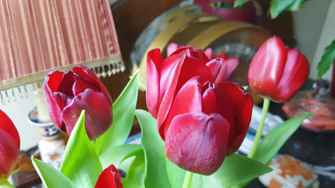 Red tulips 5 Footage