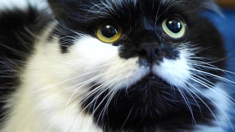 Black and white domestic cat GIF