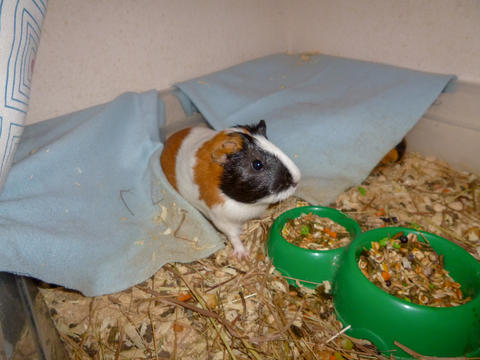mammal domestic pets one animal animals vertebrate indoors Food and Drink no Fotografía