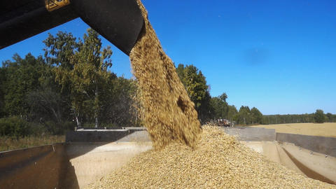 Pouring Oats into Tractor Trailer Footage