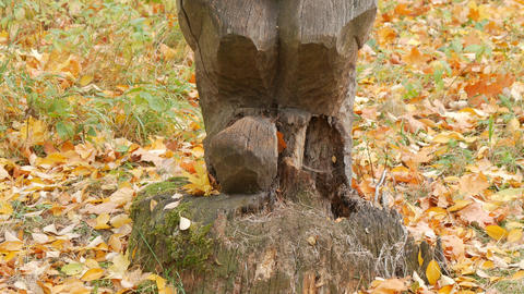 Wooden goblin in autumn park. Wood carving art . carve a bas-relief Footage