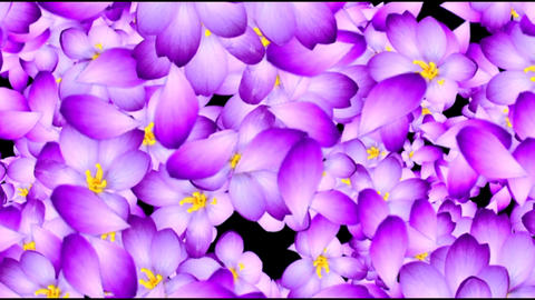 4K PURPLE FLOWER BACKGROUND Live Action