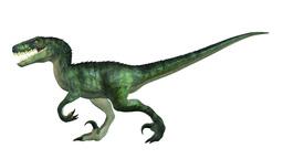 Raptor Dinosaur Animation