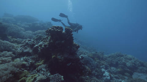 Scuba diver floating underwater blue sea near coral reef and fish. Sea diving Live Action