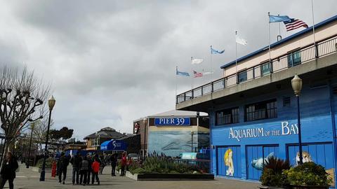 Glance of San Francisco Pier 39 and Aquarium Live Action