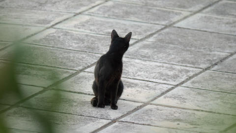 Black stray cat in the street Footage